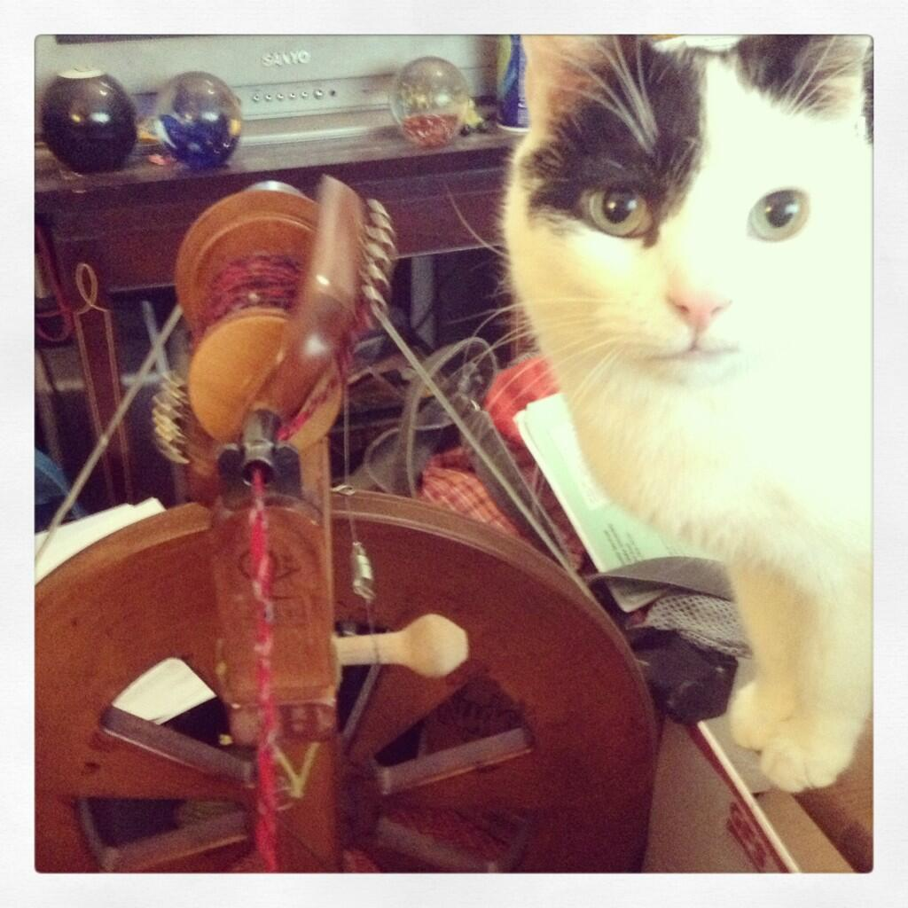 Cat and Wheel
